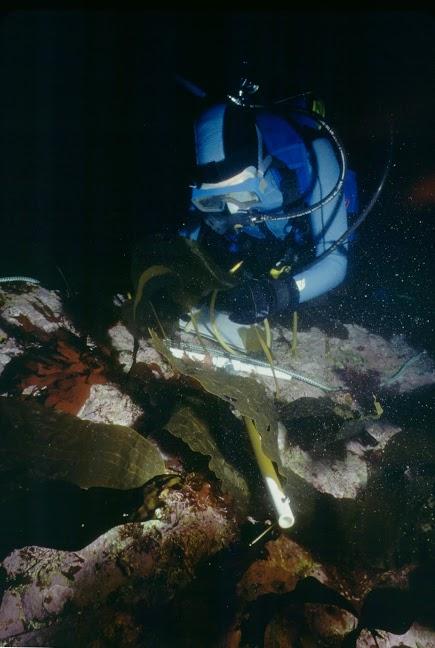 Scientific Diving Techniques