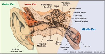 Sinus and Ear Disorders That Take Place During Hyperbaric Oxygen Therapy