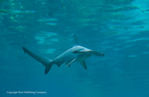 Safety Considerations for Diving Around Sharks