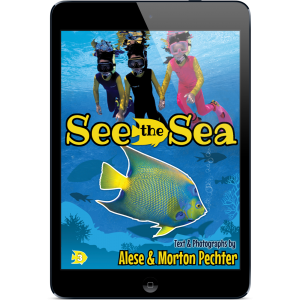 see-the-sea-ebook